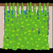 green_midori_curtain[1]